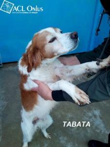 TABATA2