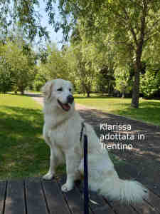 Klarissa adottata in Trentino